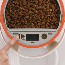 What Is An Automatic Pet cat Feeder?