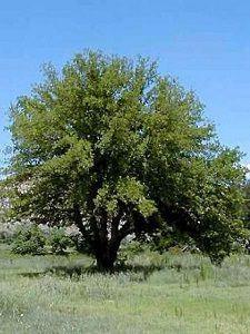 img_arbre