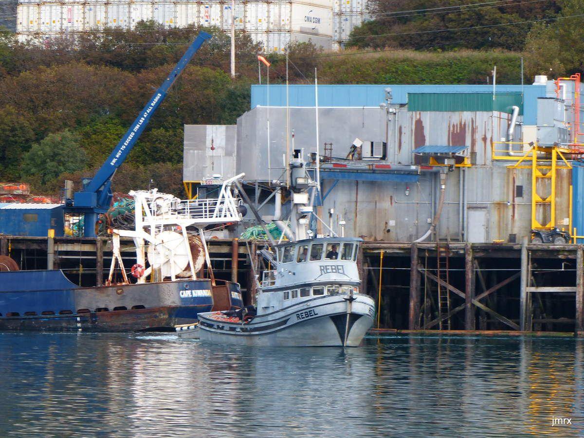 Kodiak port et conserveries. Jade au carénage sur la grille d'échouage du port.