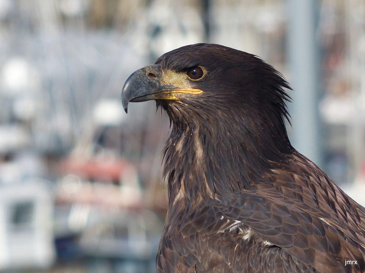 Hoona, la marina sous le contrôle de l'aigle.