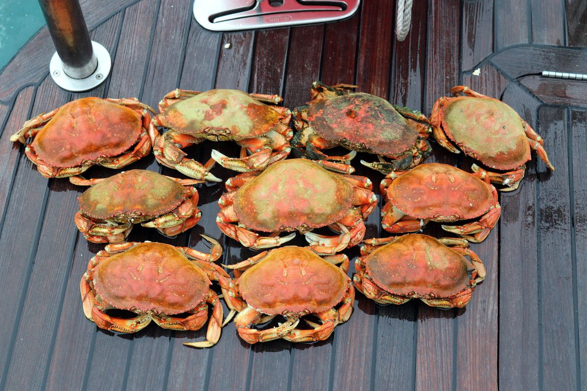Dungeness crabs.