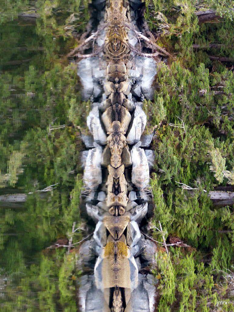 Réflexions verticales. Qui a inventé le Totem?