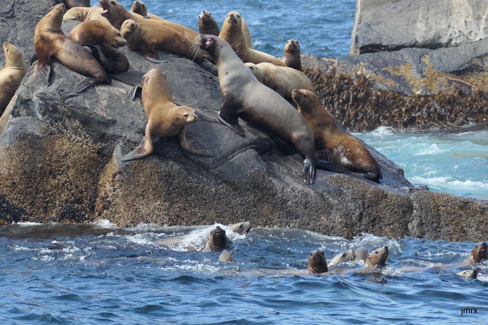 Lions Rock avant d'entrer dans Pufin Cove.
