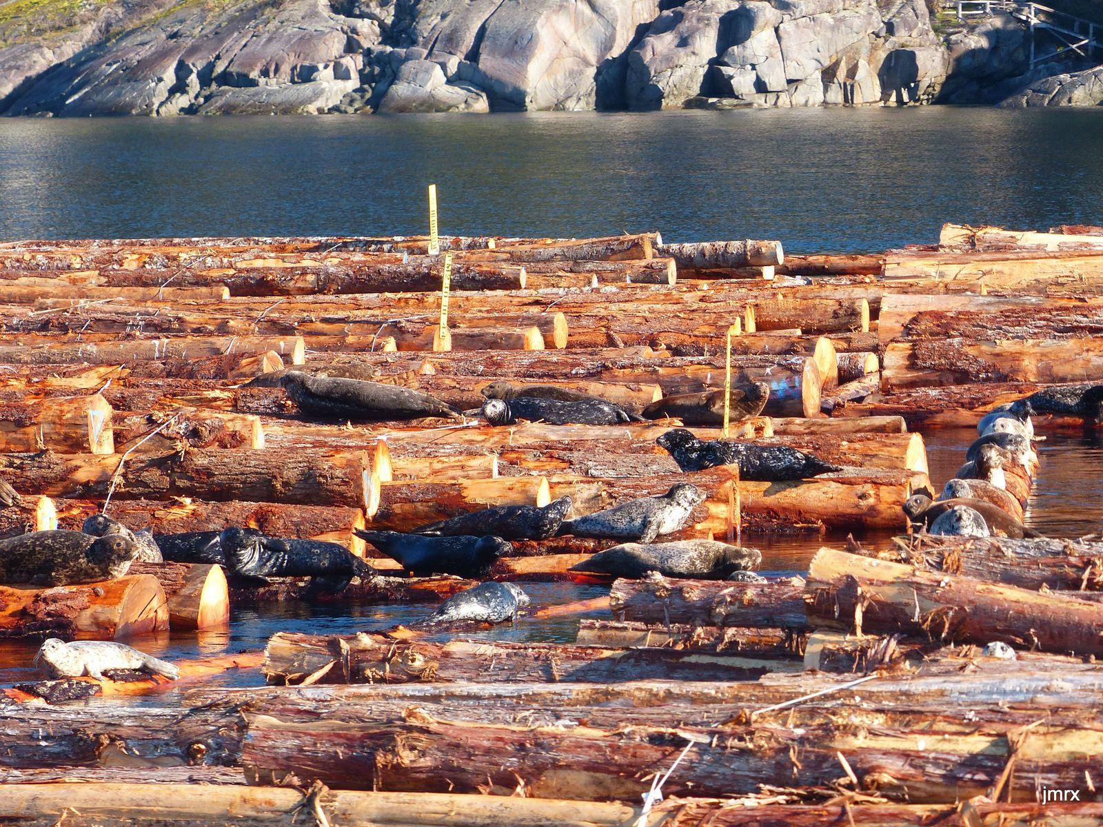 Gowland Harbour à l'automne paré de ses couleurs ocres, la beauté malgré une industrie forestière omniprésente. .