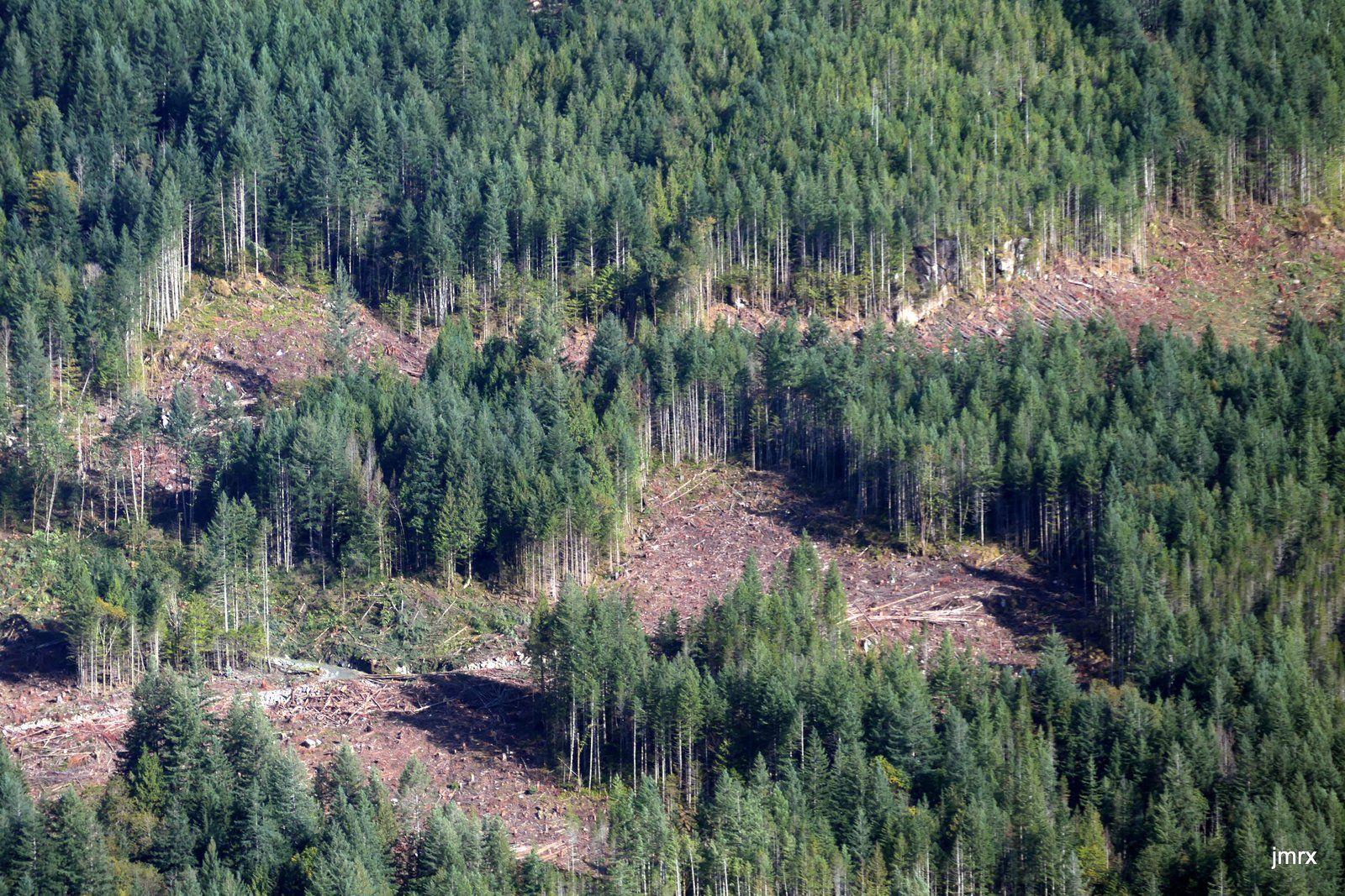 Après la déforestation la nature reprend ses droits. Les communs et la maison de maître. Entrée de Princess Louisa Inlet.