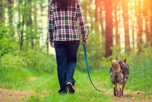 La Promenade: un moment privilégié et indispensable
