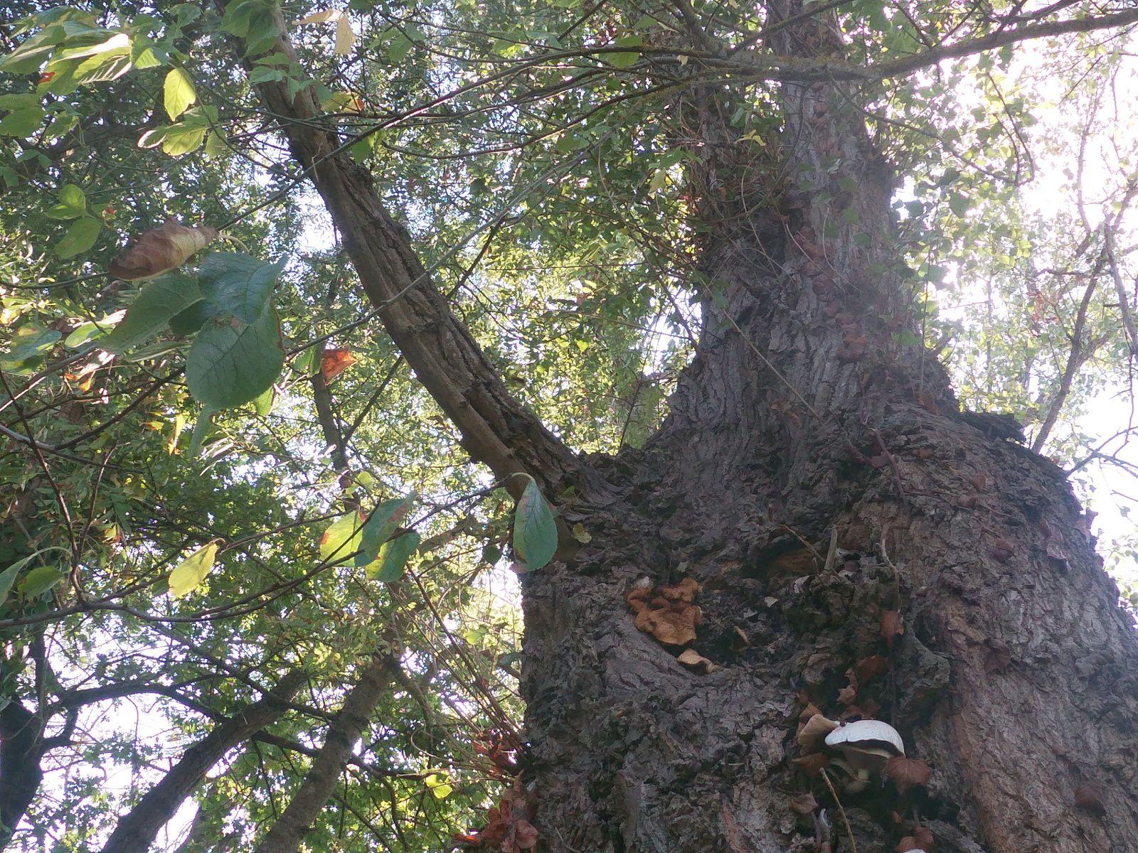 Bouliac destruction rapide de vos nids de frelons contact 06 78 18 32 34