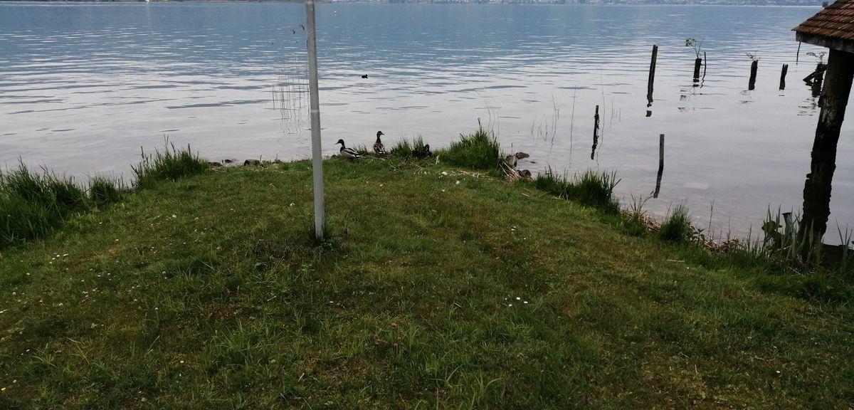 Le lac de Zurich