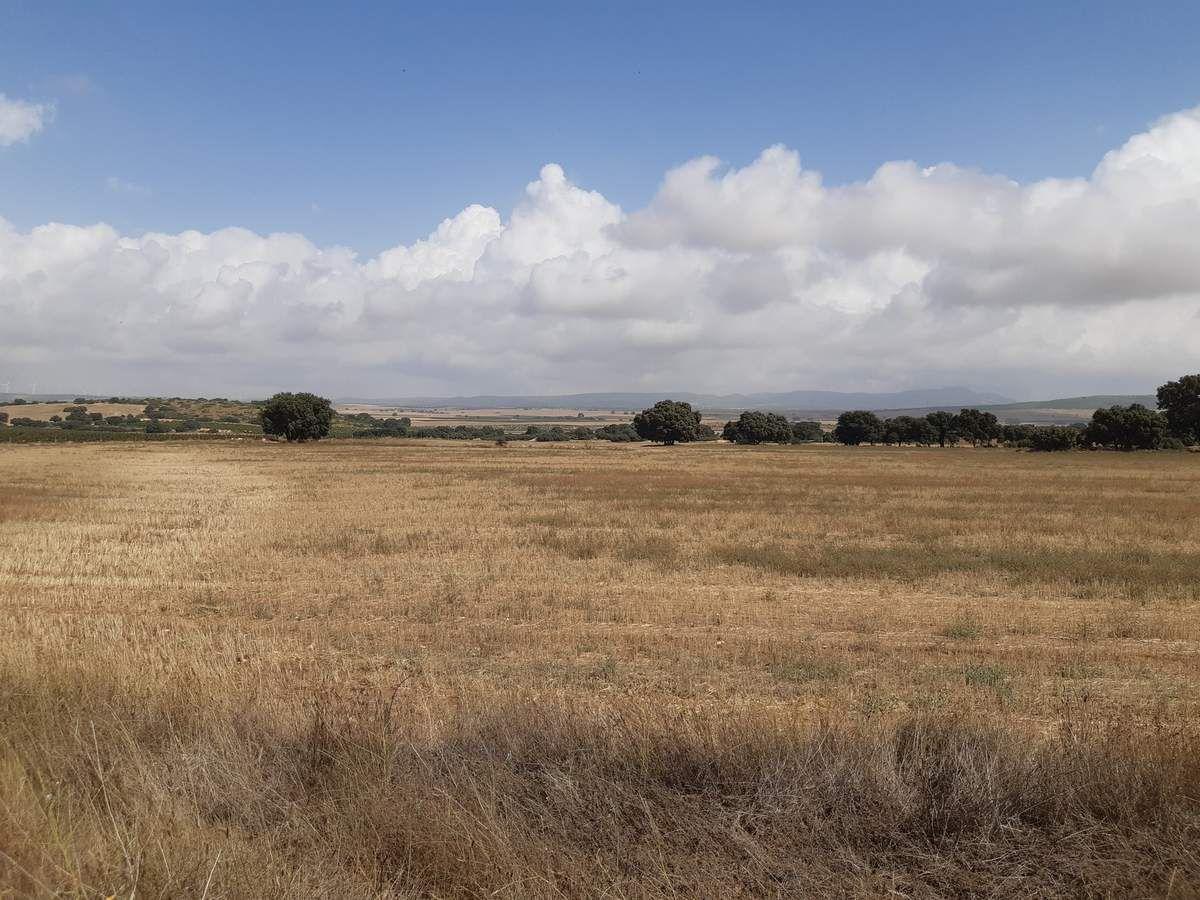 Le chemin ou le champs