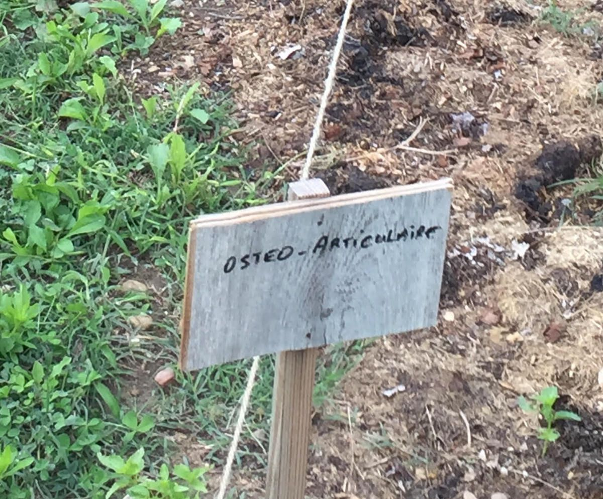 """Dans la série """"Les plantes du jardin""""..."""