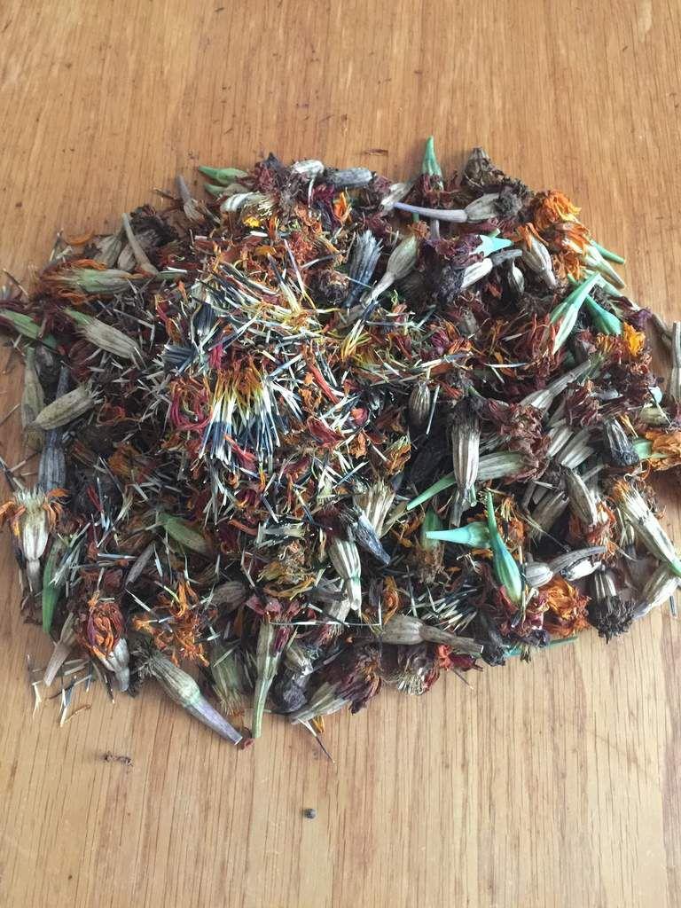 Et dès mon arrivée au jardin, une belle récolte de semences d'oeillets d'Inde s'est offerte!