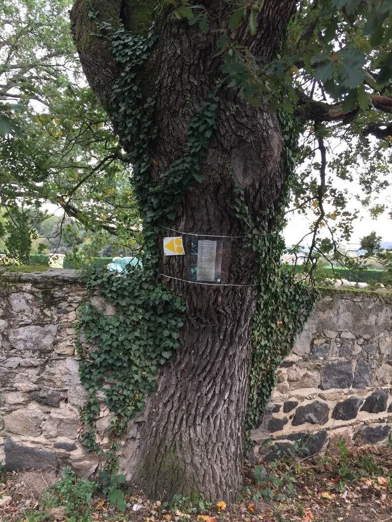 Un beau chêne avec un tour de taille imposant: presque 5 mètres! Ce n'était pas facile...
