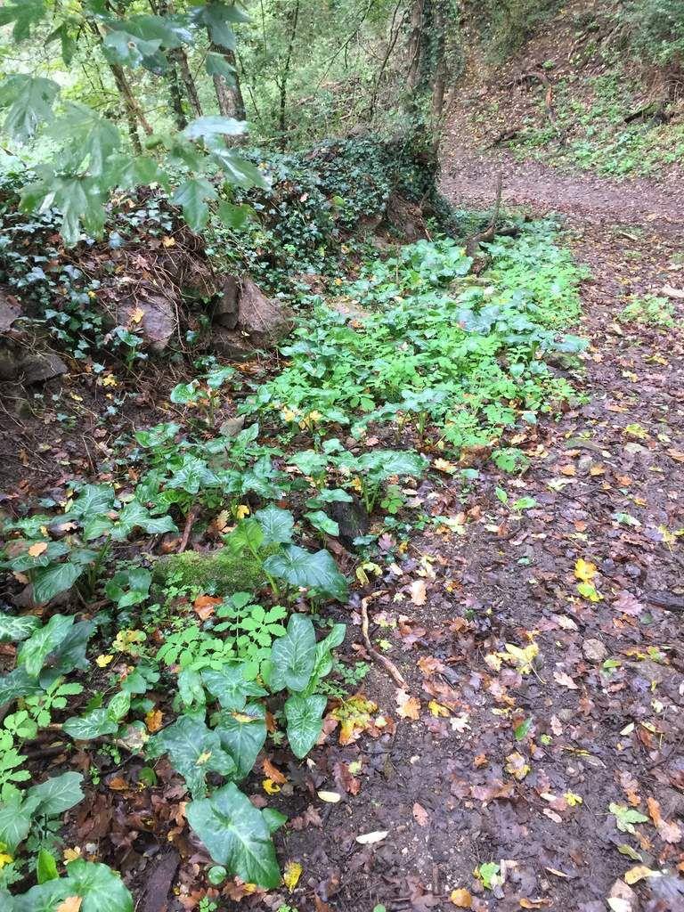 Vous arriverez dans le virage et vous laisserez le petit sentier qui mène dans le sous bois.