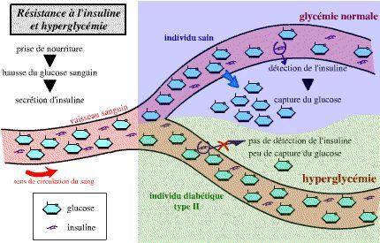 Résistance à l'insuline?