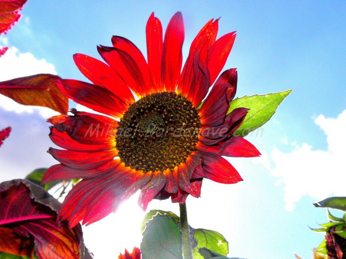 - Jardins Extraordinaires de Lieurac 2012