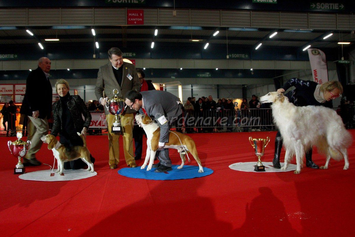 - 71e Exposition Canine Internationale Toulouse 2013