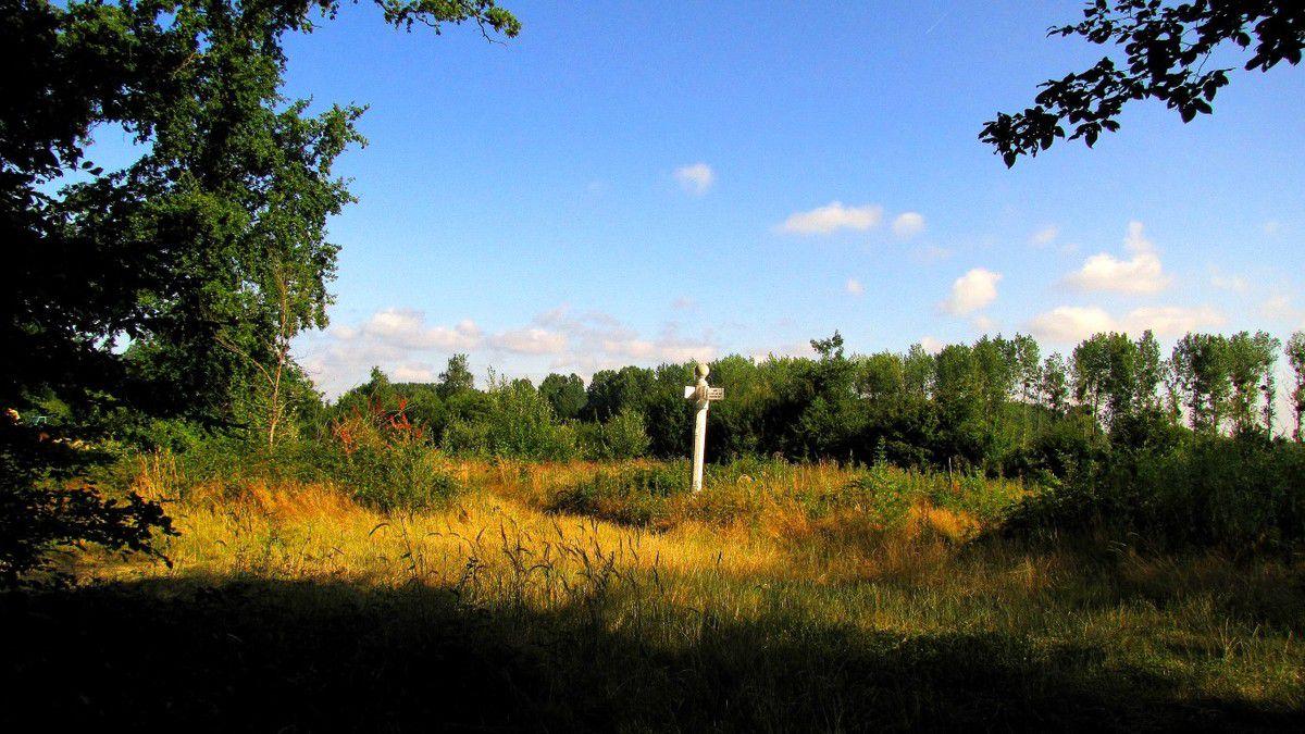 Randonnées en forêt de Laigue