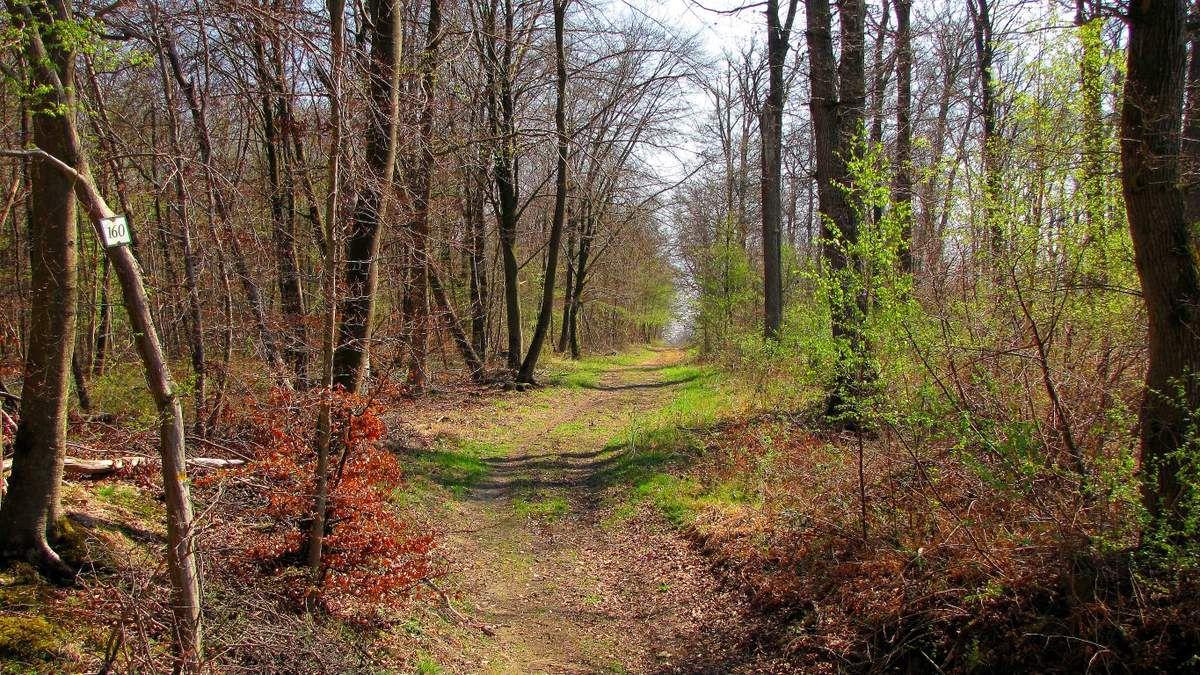 Randonnée en forêt de Laigue_le Grand Octogone