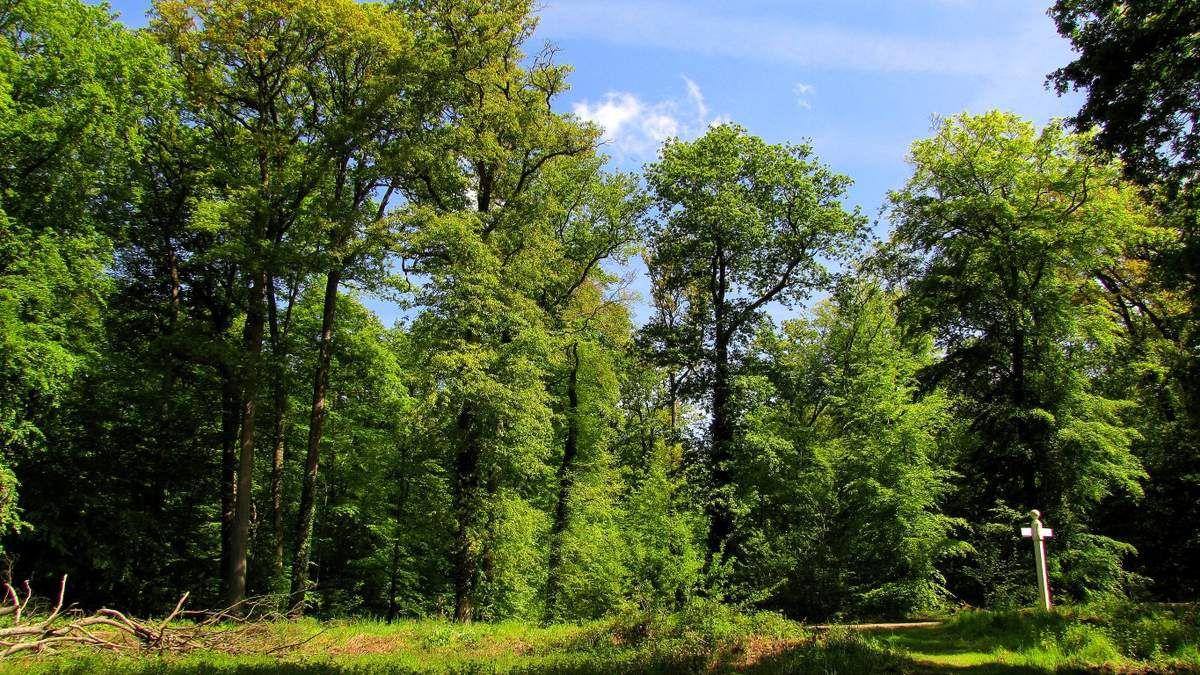 la Forêt de Laigue