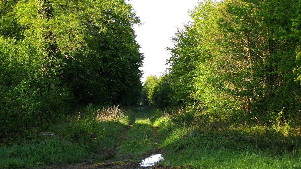 Randonnée en forêt de Laigue_le Petit Octogone et l'Octogonet