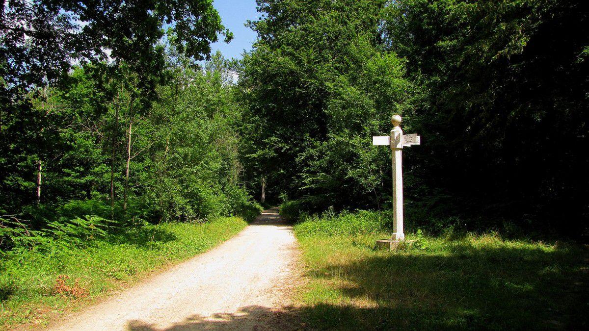 Randonnée en forêt de Laigue_La Malmère_Les Croisettes_Monts du Rond Buisson et des Châtillons
