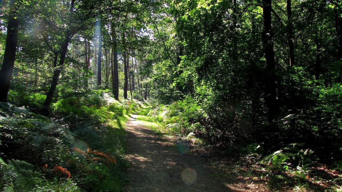Randonnée en forêt de Laigue_Mont du Fouilleux_Mont des Singes_Marais de Francière