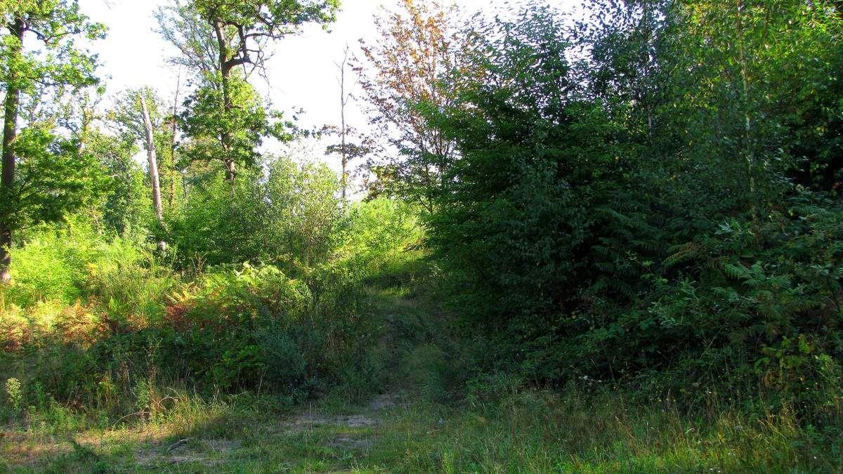 Randonnée en forêt de Laigue_Mont Moyen_Queue du Bois_Plates Noues