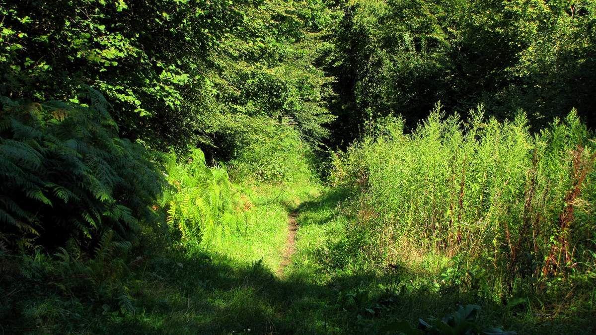 en forêt de Laigue_des carrefours sans nom