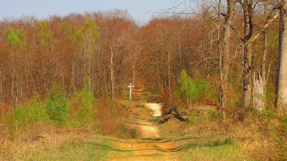 Grandes Routes Forestières en forêt de Laigue