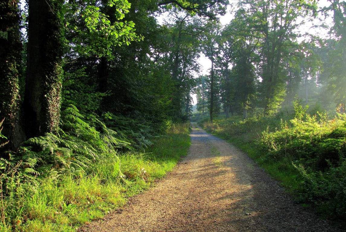 carrefour_Route de la Belle Assise_Route Forestière des Princesses