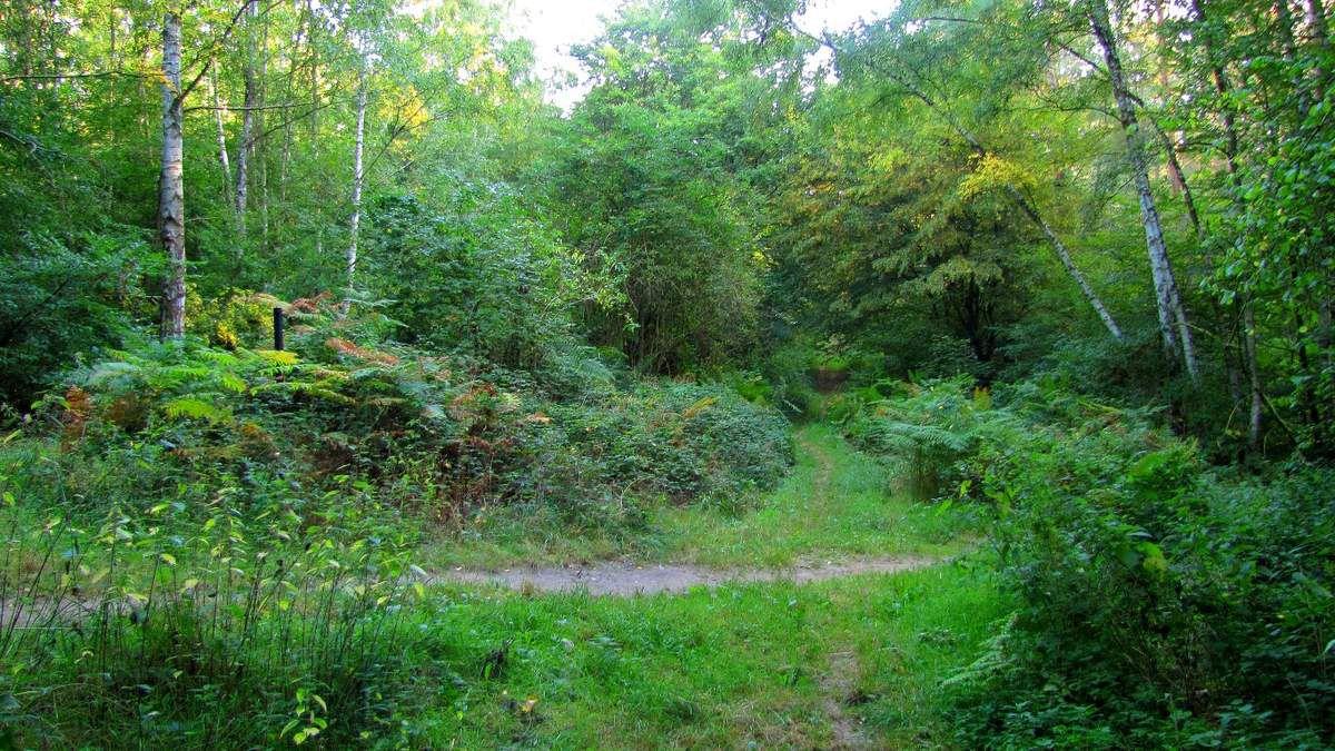 carrefour_Route du Fond Grosse Boudine_Sentier (parcelle 193)