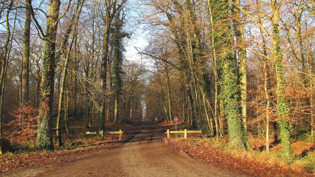 Randonnée en forêt de en forêt de Laigue_Route Forestière des Princesses_Route et Chemin de Briançon