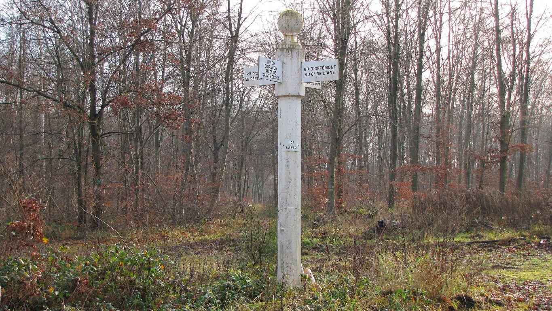 en forêt de Laigue_Route Forestière des Princesses_Route et Chemin de Briançon