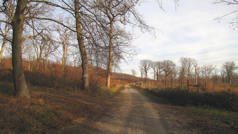 carrefour_Chemin de Rethondes à St-Crépin-aux-Bois_Route de la Forêt Saint-Pierre