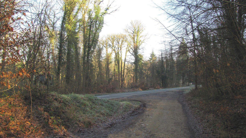 carrefour_Route Forestière des Princesses_D130