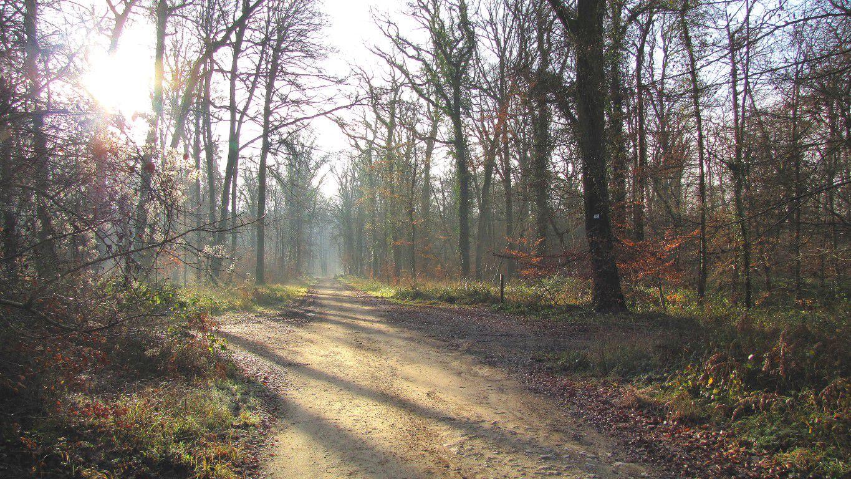 carrefour_Route Forestière des Princesses_Chemin de la Fontaine à Loups