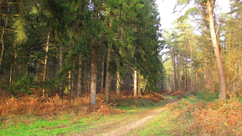 carrefour_Chemin de Rethondes à St-Crépin-aux-Bois_Sentier (parcelle 168)