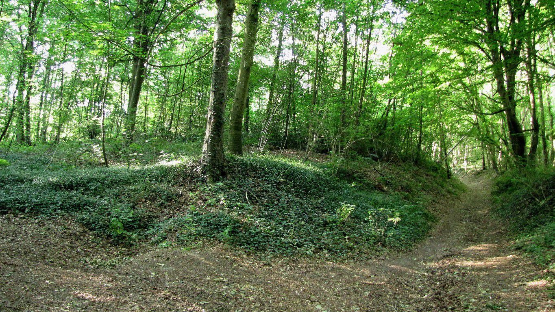 Randonnée en forêt de Laigue_Chemin du Fau Bidaud et la Route de Royaumont