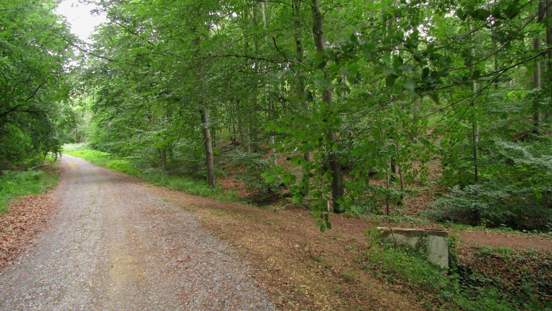 Randonnée en forêt de Laigue_les Routes des Bonshommes, de la Trouée des Bonhommes_Route forestière de Sainte-Croix