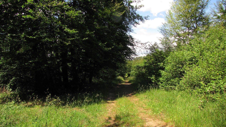 carrefour_Route du Mont des Singes_Route de l'Aurore