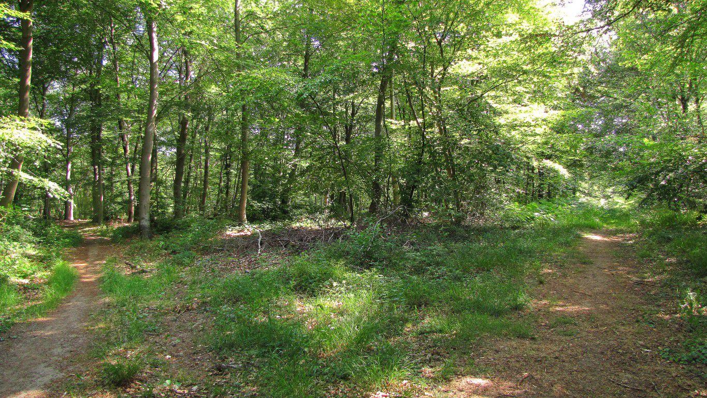 le carrefour du Châtelet dans la forêt de Laigue
