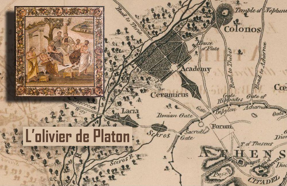 L'OLIVIER DE PLATON - SON HISTOIRE