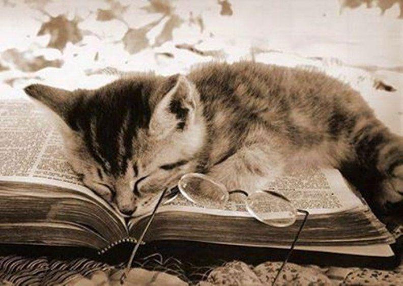 des-chats-des-livres.over-blog.com