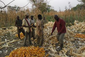 Food security: A major challenge for today and tomorrow