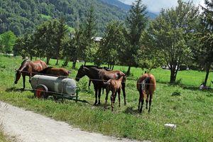 Un nouveau séjour dans les Alpes (Fin)