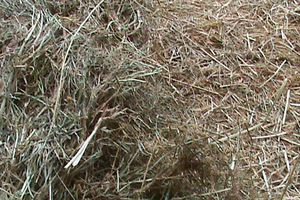 La conservation des fourrages par voie sèche (foin, fourrage déshydraté)