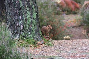2017_Les Bottes Rouges_52 semaines en images#16_Animaux de la forêt