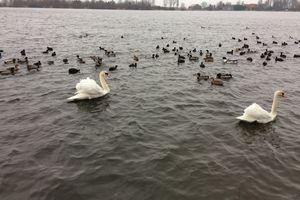 Sortie au Lac d'Armbouts Cappel le mercredi 8 février
