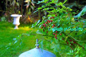 Tour au Jardin, récoltes de Décembre