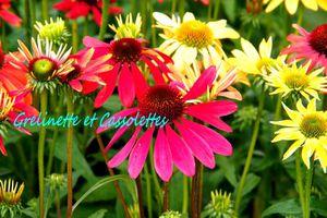 Merveilleuse Fête des Plantes de Saint Jean de Beauregard 2